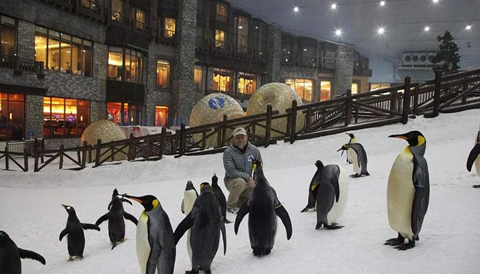 پیست اسکی روی یخ دبی ( Ski Dubai)